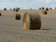 paille-de-cereale-france-photo-©-frederic-douard-www.bioenergie.promotion.fr