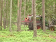 test-de-restitution-des-cendres-de-bois-en-foret-finlandaise-photo-recash-project-www.bioenergie-promotion.fr