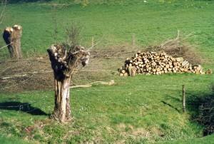 Coopération franco-belge : facteurs de réussite du bois-énergie