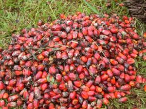 Le parlement européen s'oppose à l'usage d'huile de palme comme biocarburant