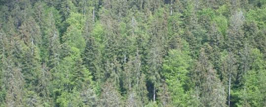 Forêt jurassienne, photo Frédéric Douard