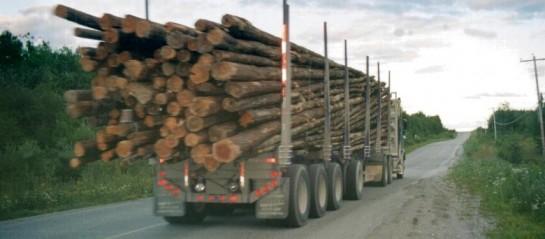 France, nouvelle réglementation du transport routier de bois rond MAGAZINE ET PORTAIL  # Camion De Bois De Chauffage