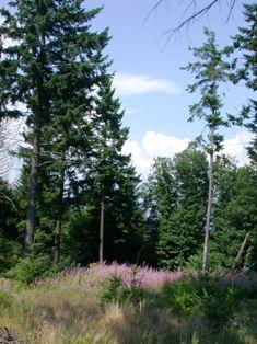 Forêt de Bourgogne, photo Frédéric Douard