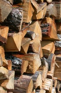 Bûches de chêne au séchage, photo Frédéric Douard