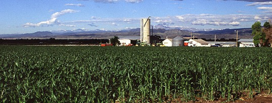 Production de maïs au Colorado, photo Scott Bauer, USDA ARS
