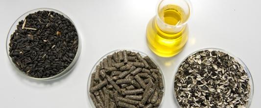 Les produits de Saipol, graines, huile, touteau et coques, photo Sofiprotéol