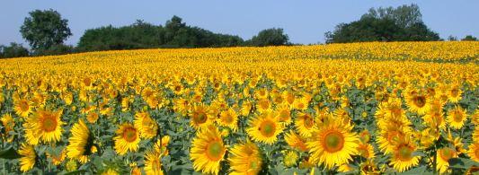 La Commission européenne publie les critères de durabilité pour les biocarburants