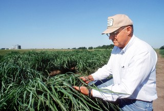 Panic érigé, Brett Hampton, USDA, service de recherche agricole, photo USDA