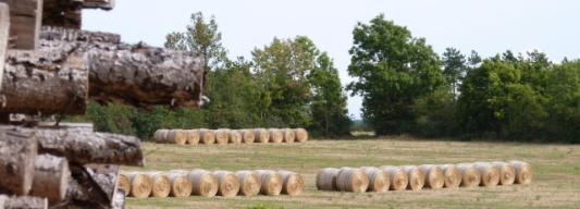La biomasse est la première énergie renouvelable d'Europe, photo  Frédéric Douard