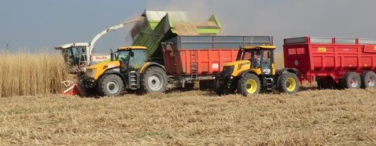 Savoir choisir une culture de biomasse avec le lignoguide - Chambre agriculture de la somme ...