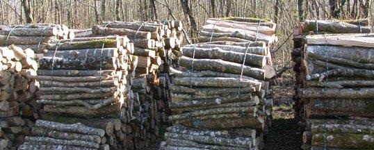 Fagots de bois de chauffage en bord de route, photo Frédéric Douard