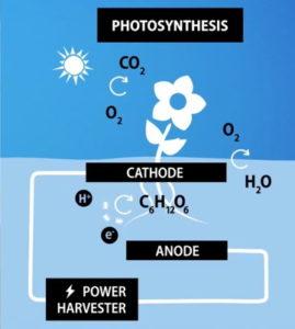Produire de l'électricité à partir d'une pile microbienne à plantes
