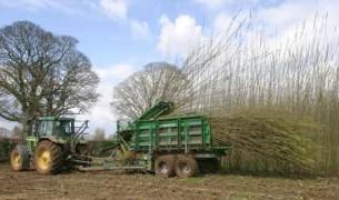 Récolte de TCR en Wallonie, photo ValBiom