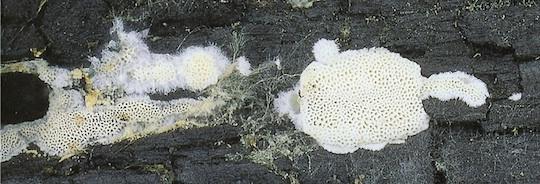 Dégradation de la cellulose par les champignons, photo Université de Helsinki