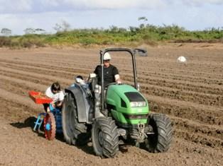 Plantation de miscanthus en Guyane, photo Guyane Consult