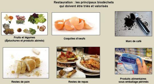 Les principaux biodéchets, ADEME