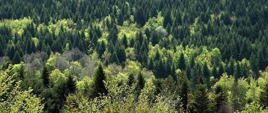 Forêt vers Laguiole en Aubrac, photo Nina Camberoque
