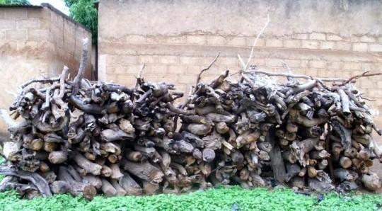 Bois de feu pour la transformation des noix de karité, photo E.S. Noumi, Cirad