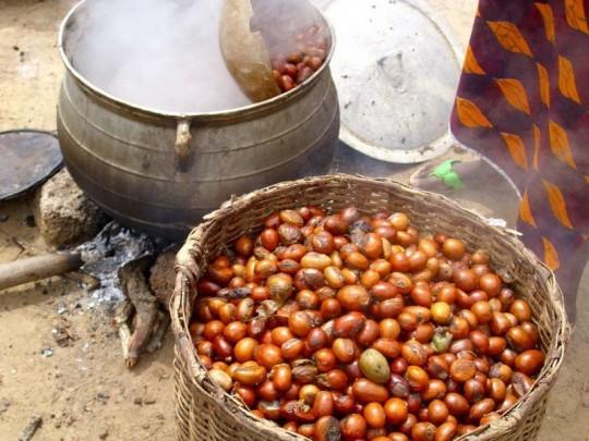 Passage à l'eau bouillante des noix de karité, photo E.S. Noumi, Cirad