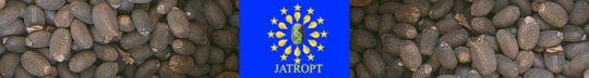 Jatropt
