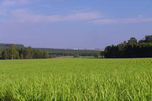 UK Biomass