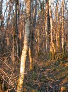 Forêt française non exploitée, photo Frédéric Douard