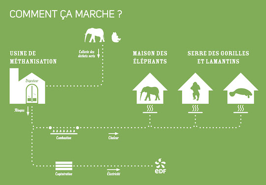 ZooParcBeauval-Metha_comment_ca_marche - web