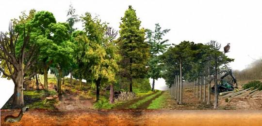 Dessin du guide, extrait de la plaquette «Forêt, biodiversité et changement climatique» France nature Environnement