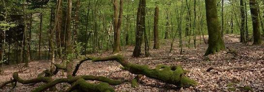 Forêt, photo FNE
