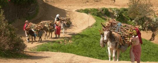 Transport de bois-énergie au Maroc, photo Géres