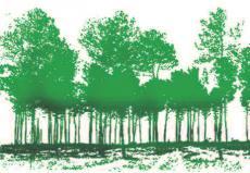 Modélisation 3D d'une forêt de pins maritimes par scanner laser terrestr, © S. Durrieu, Irstea