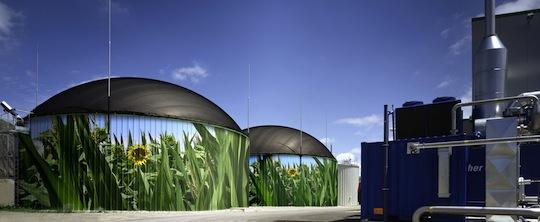 Le biogaz en Allemagne est jusqu'ici principalement produit avec du maïs