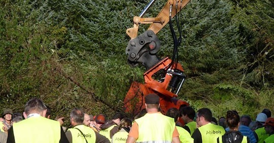 Abattage de douglas en échec lors du chantier Test bois-énergie Breizh Forêt Bois n°1, photo Abibois