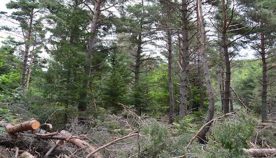 Parcelle forestière de l'ASL Le Tréboux dans les Alpes de Haute-Provence, photo Jonathan Pitaud