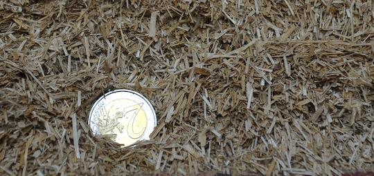 L'anas ou paille de lin est la tige broyée de la plante, à laquelle on a enlevé la fibre, photo Frédéric Douard