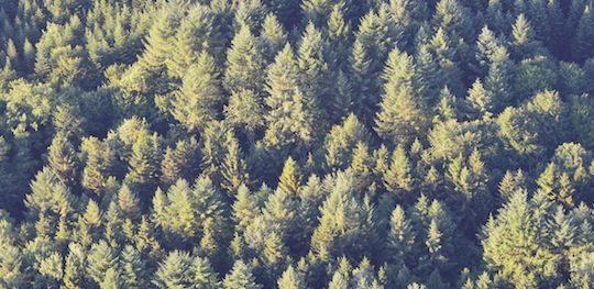 Forêt jurassienne vue du ciel, photo Frédéric Douard