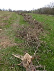 Andain de souches après déchiquetage des arbres, photo FD CUMA BN