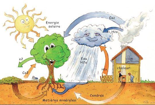 Cycle du carbone et bois-énergie, Urwana Leduc, ITEBE
