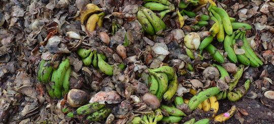 Déchets de fruits et légumes, photo Frédéric Douard