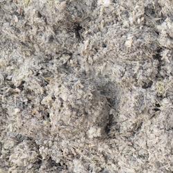 L'herbe de betteraves est une composante de la ration, photo Frédéric Douard