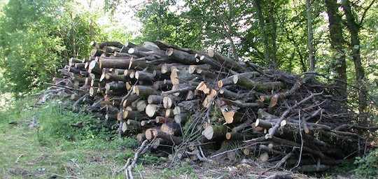 Le bois feuillu représente la plus grande marge de disponibilité en France, photo Frédéric Douard