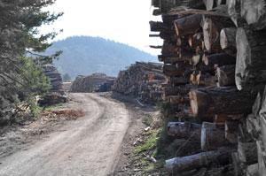 Le stockage de bois de l'entreprise Apex Bois