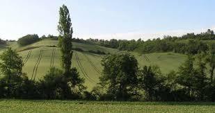 agroforesterie-ripisylve