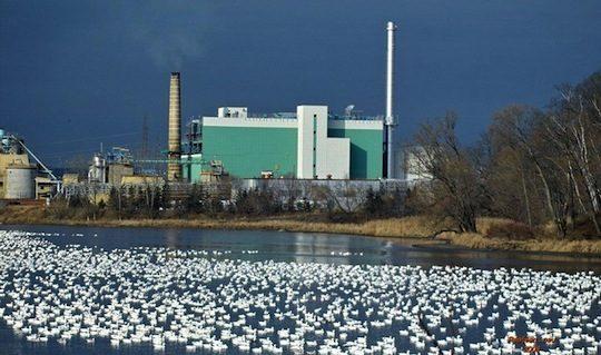 Centrale de cogénération à la biomasse de Brompton, photo  © Kruger
