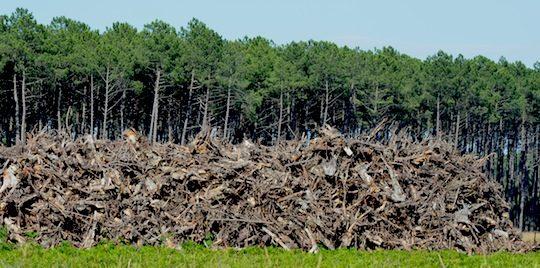 La valorisation énergétique des souches dans les Landes permet de mobiliser plus de biomasse, photo Frédéric Douard