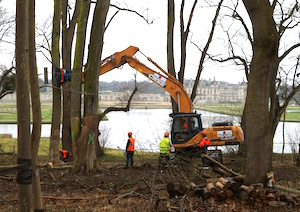 Chantier d'abattage Ramery au domaine du château de Chantilly, photo Ramery