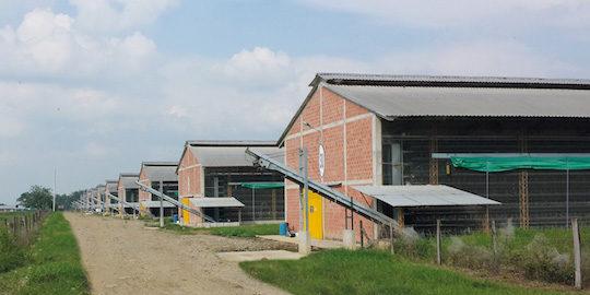 L'un des élévages de poules pondeuses de l'industriel Incubadora Santander en Colombie