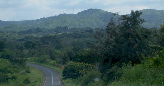 Biomasse forestière au Cameroun, photo Frédéric Douard