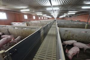 L'élevage de la SCEA Texier à Saint-Nicolas-du-Tertre, photo Frédéric Douard