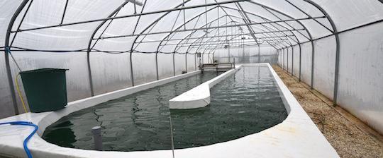 La serre et le bassin de culture de la spiruline chez Fresne Energie, photo Frédéric Douard
